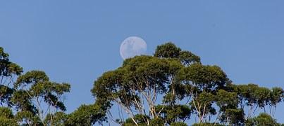 moon-1164144__180.jpg