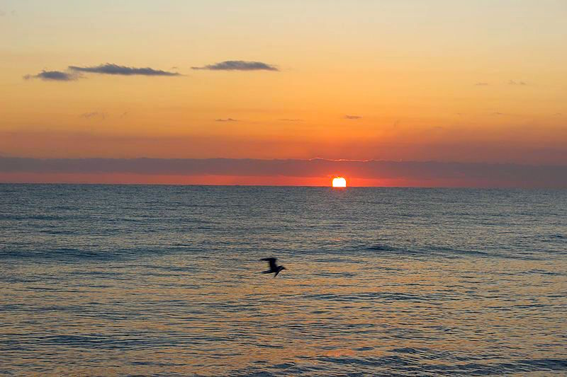 Spring_sunrise_at_Palm_Cove_north_eastern_Queensland-1.jpg