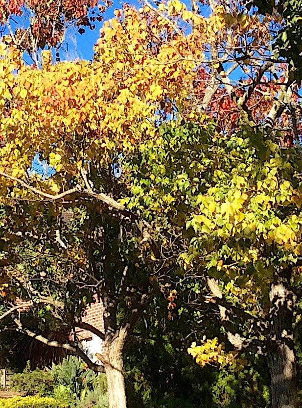 Autumn 4.jpg
