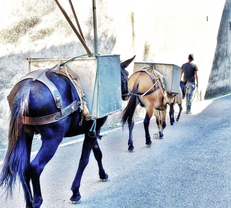 Scala mules.jpg